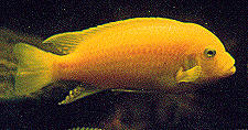 Fish Images